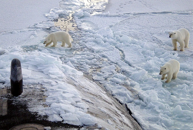 Polar bear watching, Manitoba, Canada Attractions
